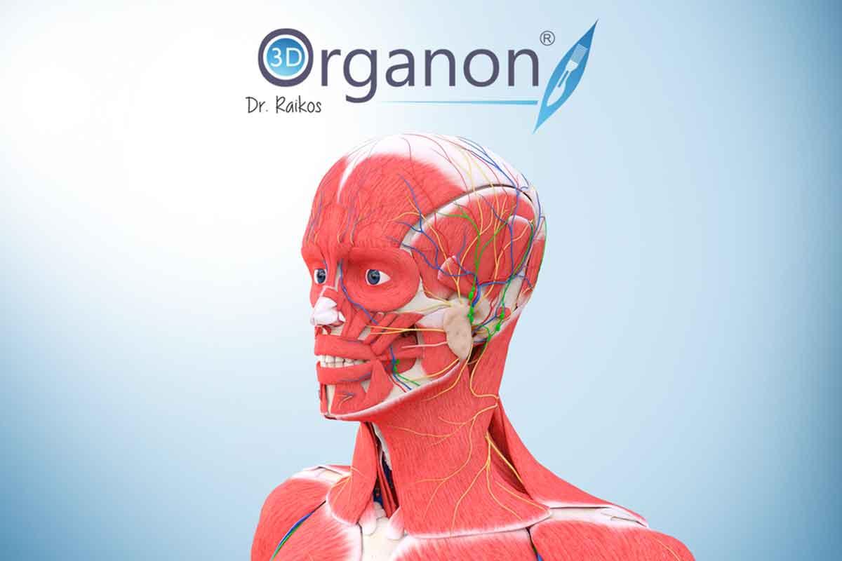 Oculus Rift: VR Anatomy ausprobiert – 3D-Lehrstunde in Anatomie ohne ...
